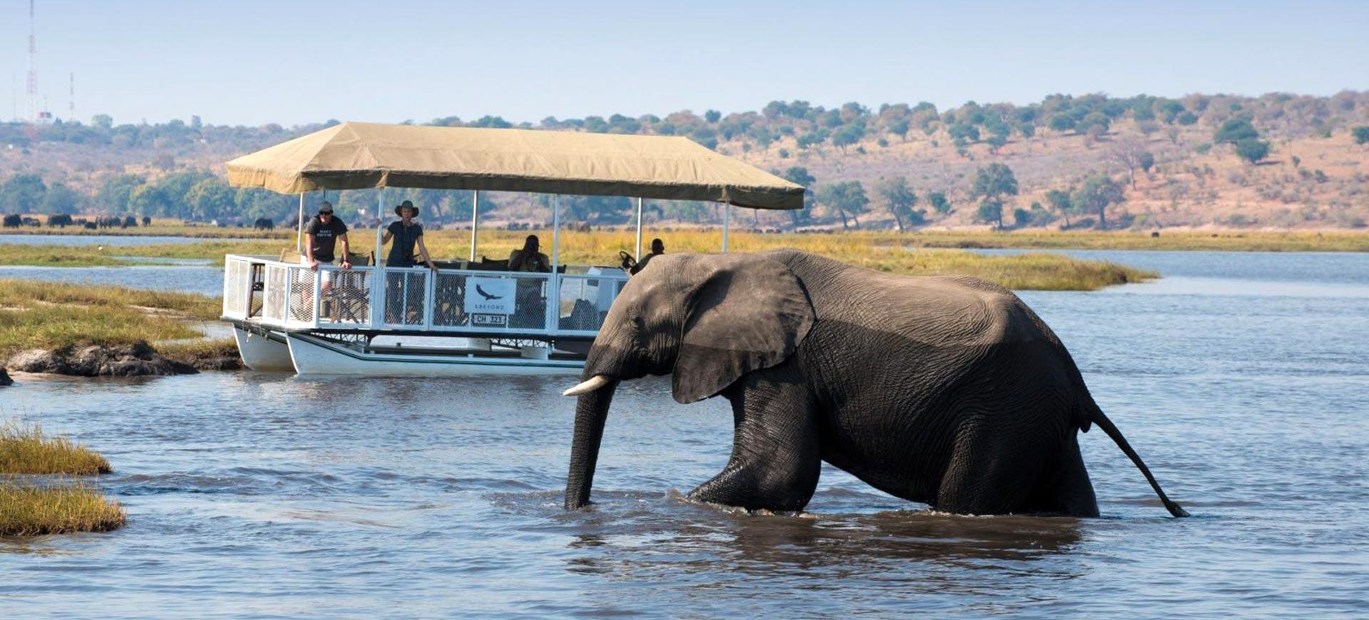 Chobe River Cruise Safari