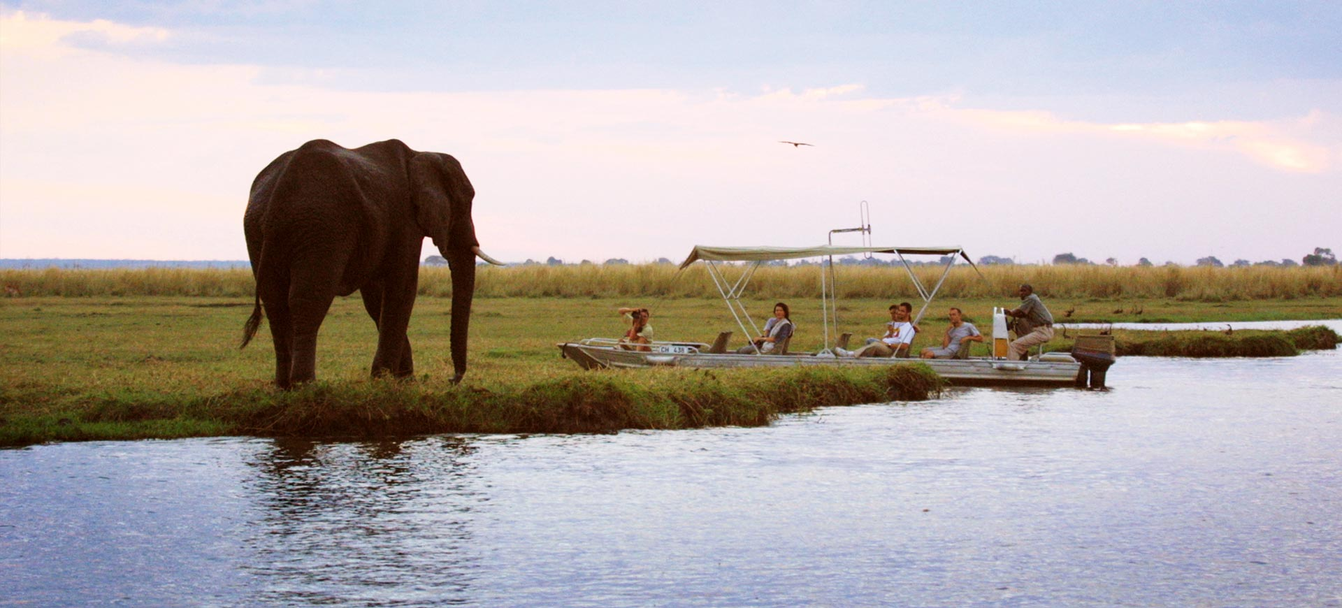 Chobe Safari Lodge Elephant