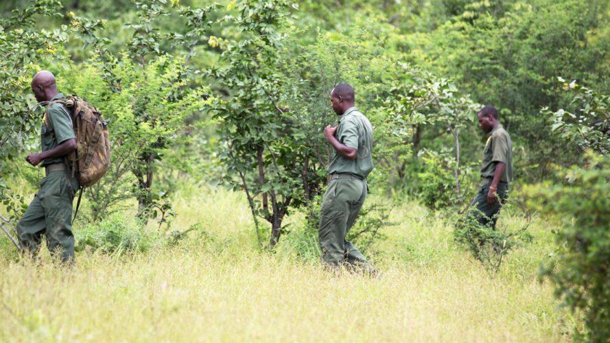 Wildlife Conservation Safari