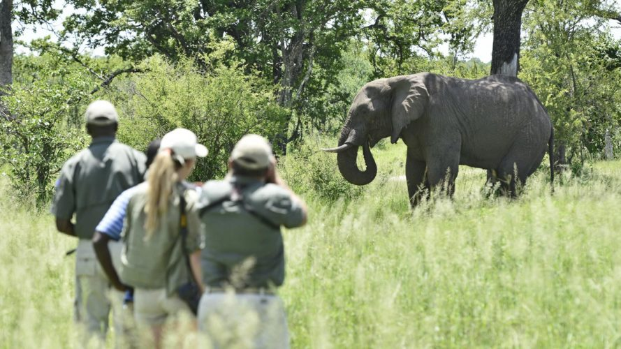 Wildlife Conservation Walking Safari