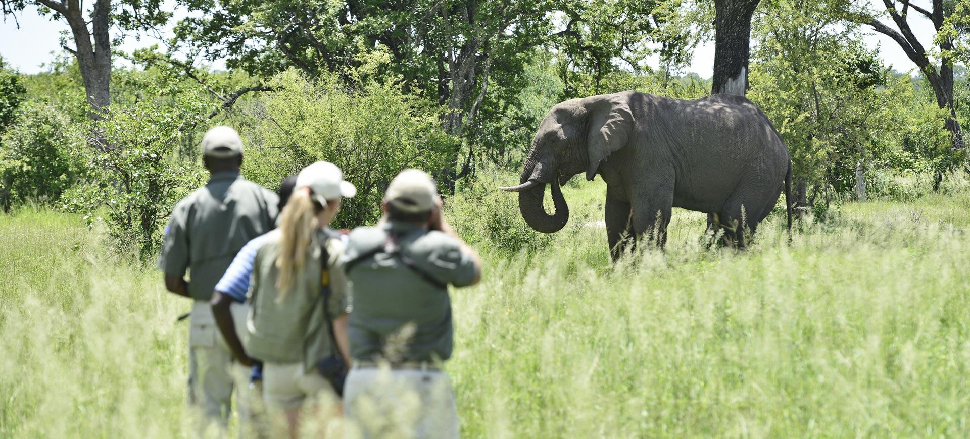Wildlife Conservation Walking Safari