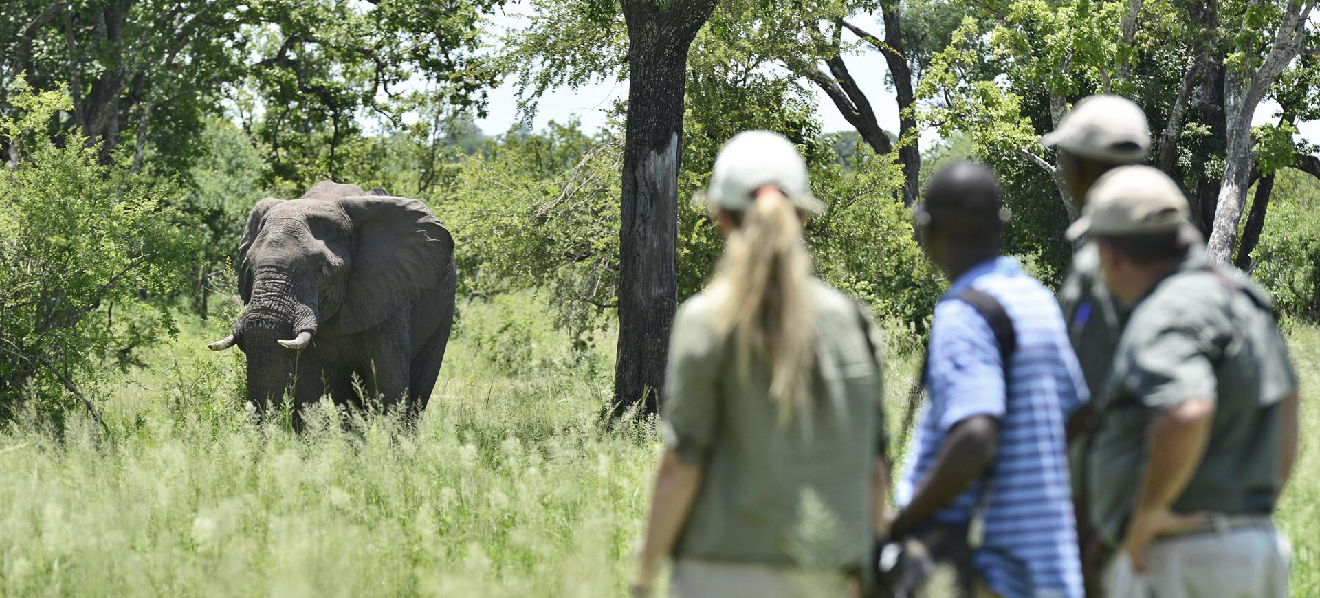 Wildlife Conservation Zambezi National Park