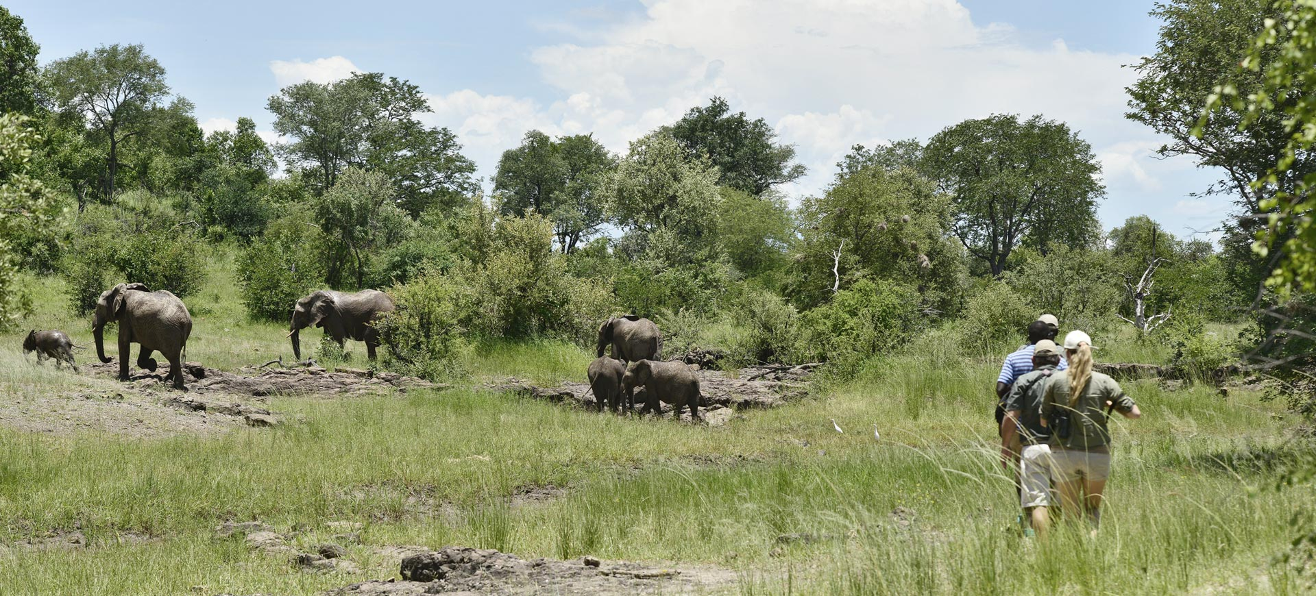 Zambezi National Park Conservation Safari