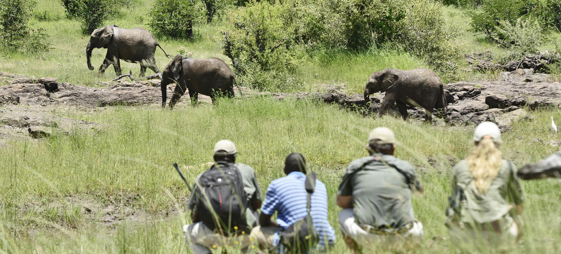 Zambezi National Park Wildlife Conservation Safari