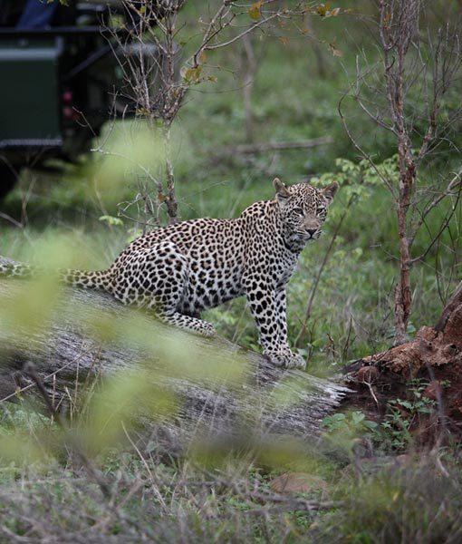 Ecotourism Kruger National Park