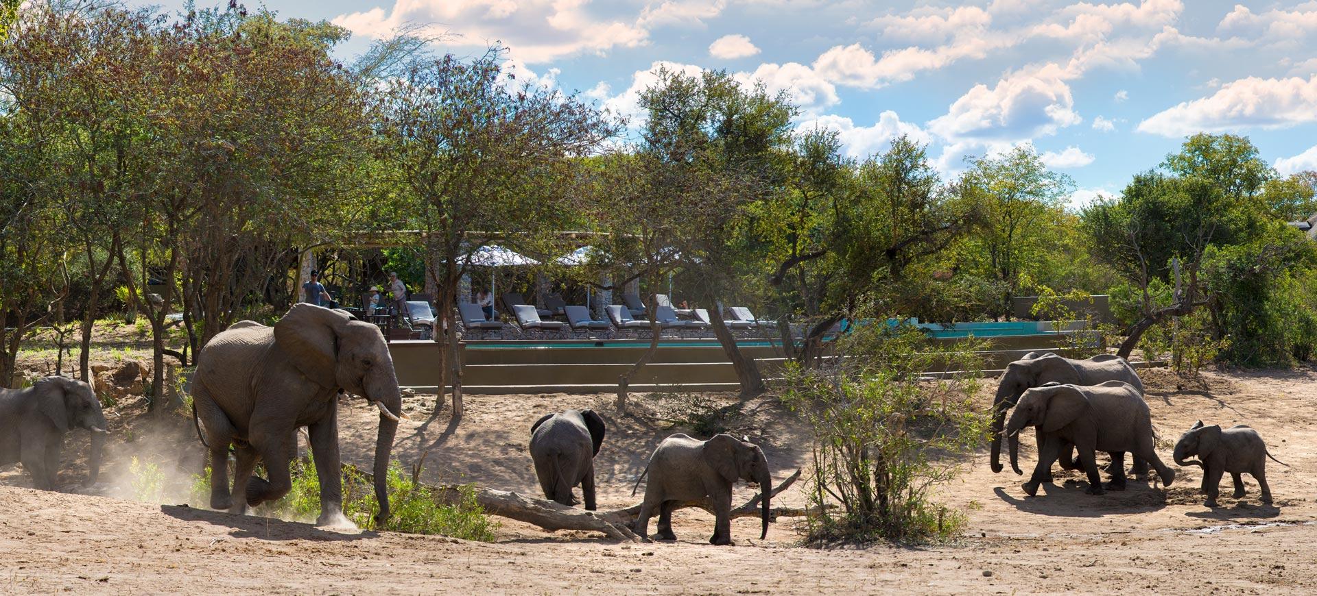Kruger Park Ngala Lodge