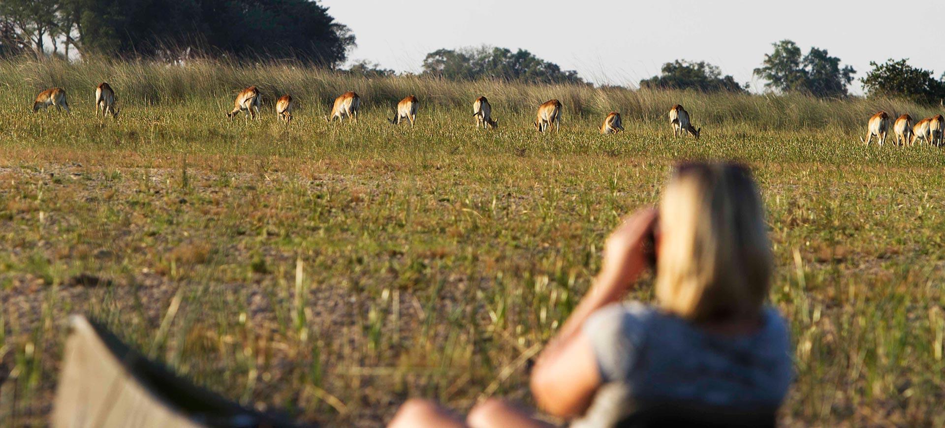 Mokoro Activity Okavango