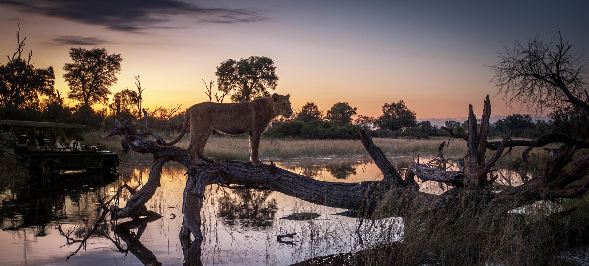 Okavango Delta Botswana Game Drive