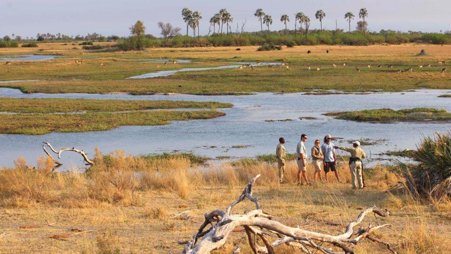 Okavango Delta Walking Safari