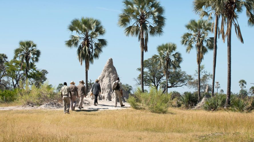 Okavango Walking Safaris