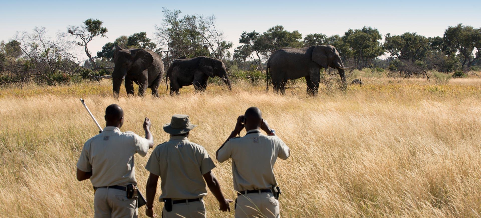 Walking Okavango Delta