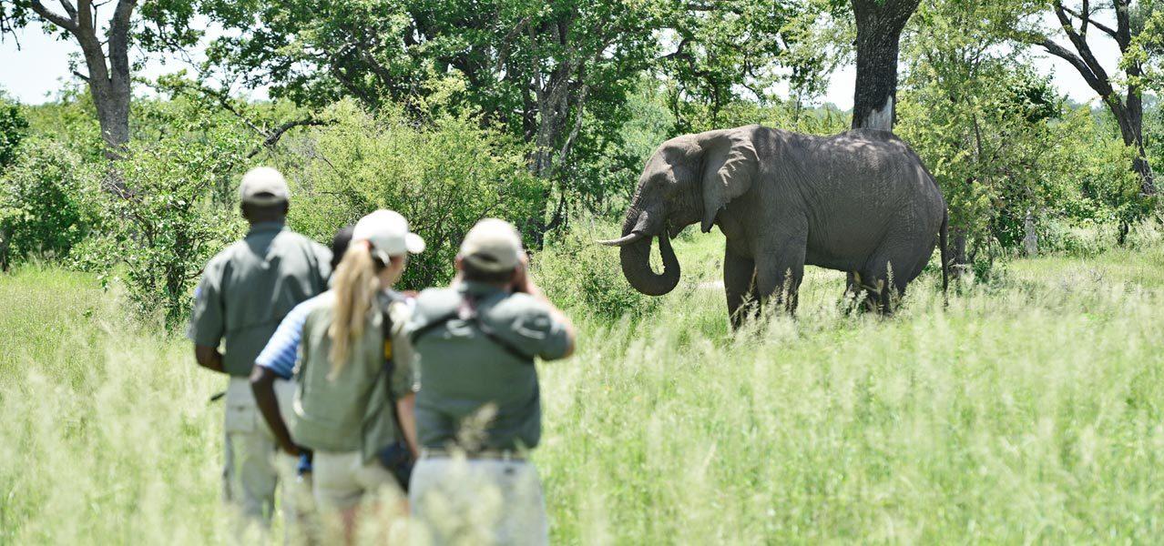 Victoria Falls Conservation Safari