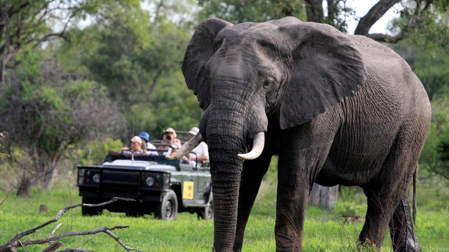 Game Drive Kruger Park