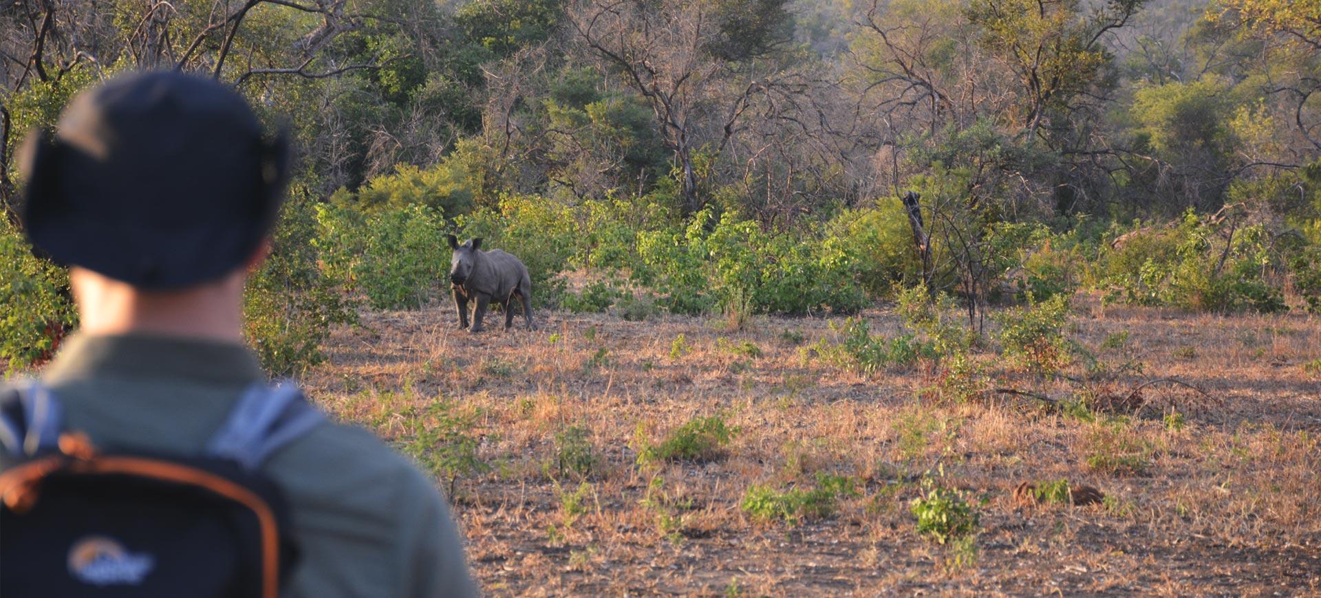 Guided Walking Kruger