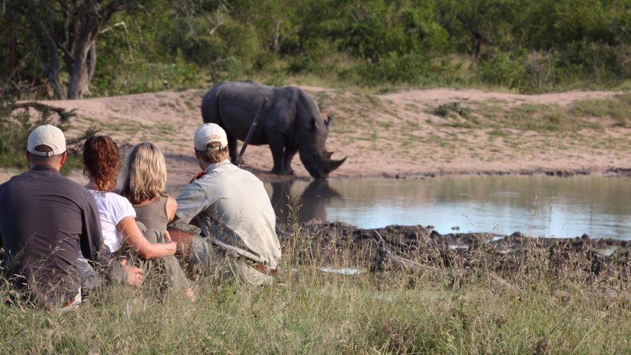 Guided Walking Safari Kruger National Park