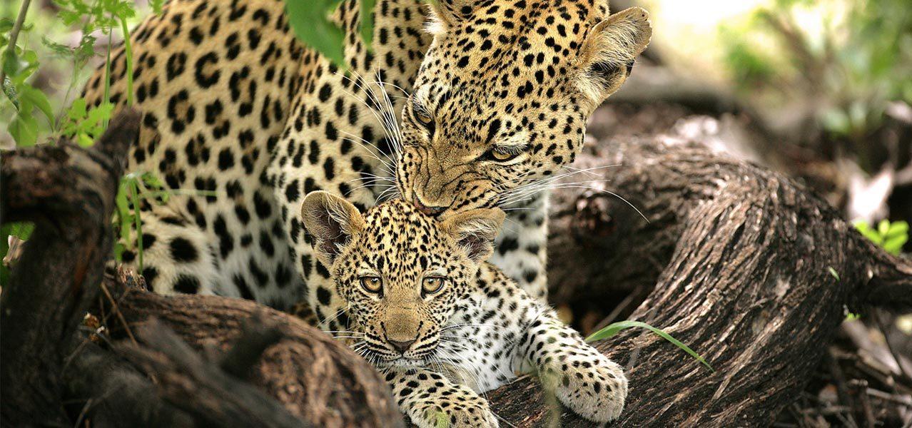 Kruger Ecotourism Safari