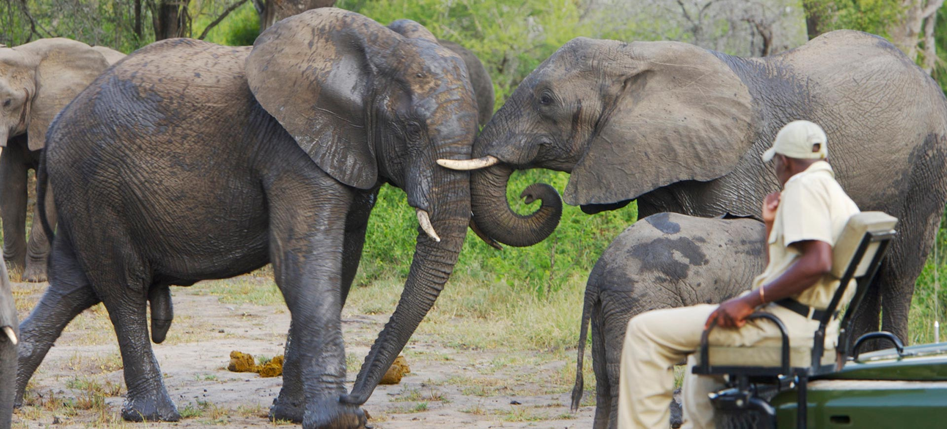 Kruger Game Drive Elephants