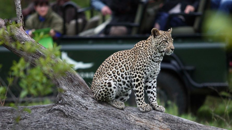 Kruger National Park Safari Game Drive