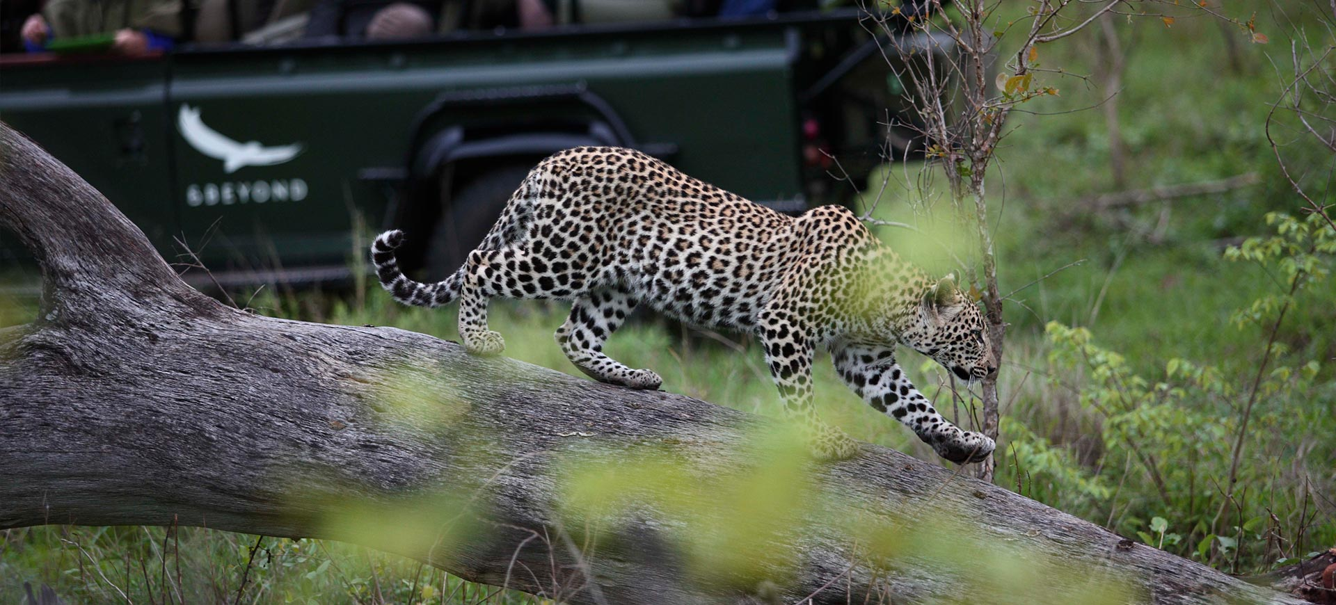Kruger Park Safari Game Drive