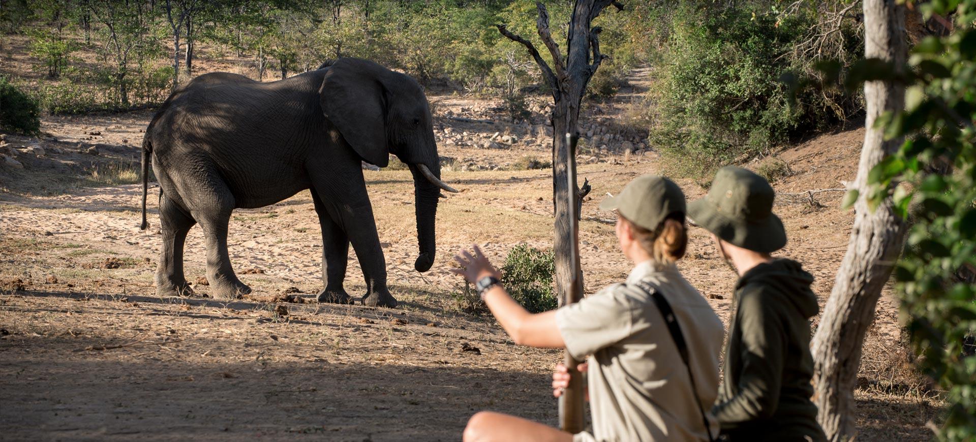 Kruger Park Walking Safari