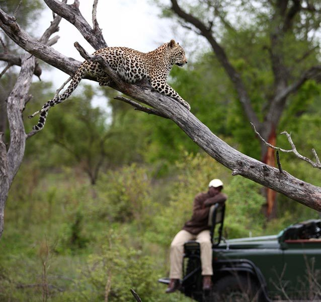 Kruger Safari Game Drive