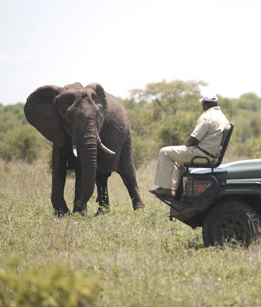 Kruger vs Botswana