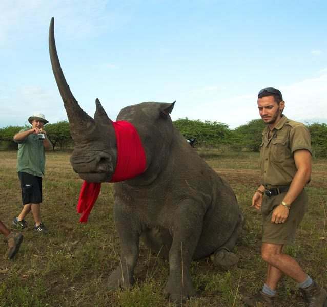 Rhino Notching