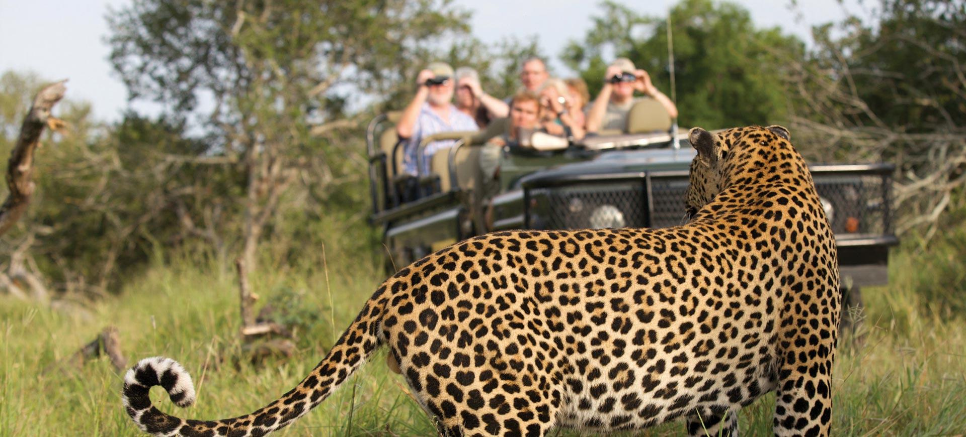 Safari Game Drive Kruger Park