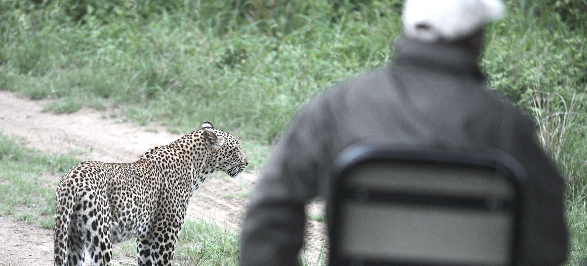 Leopard Conservation In Kruger