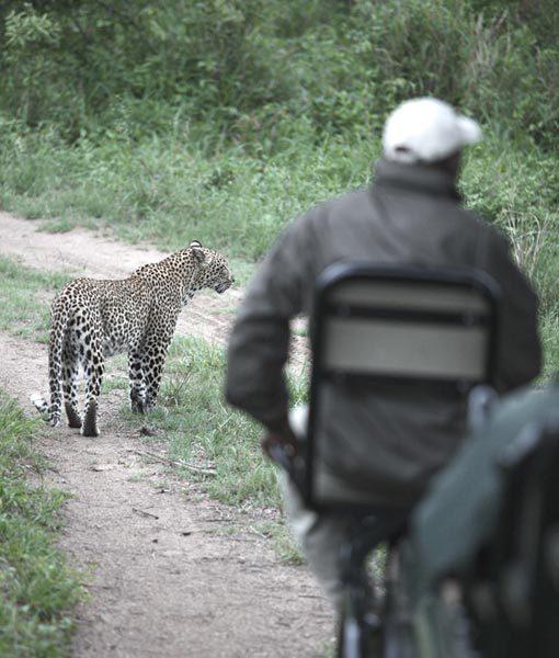 Leopard Conservation Kruger