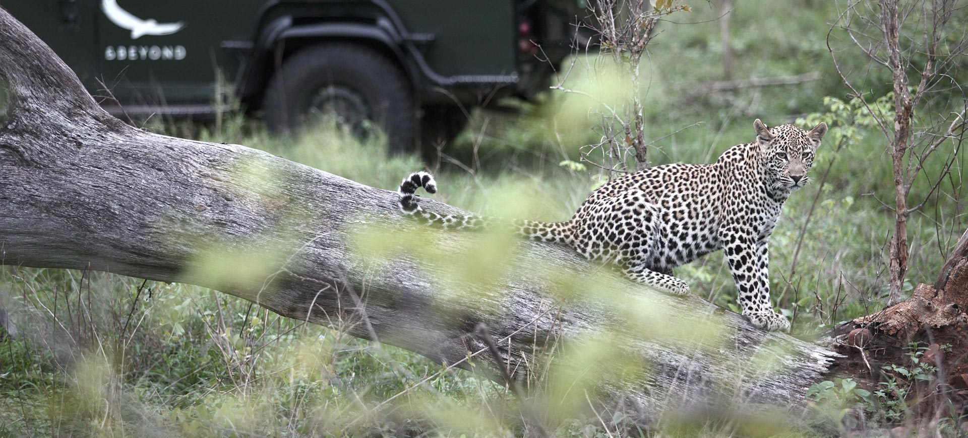 Wildlife Conservation Kruger